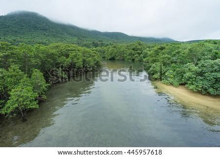 Lush green jungle and mangroves - stock photo