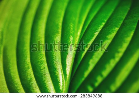 Lush green leaf texture background, concept of nature - stock photo