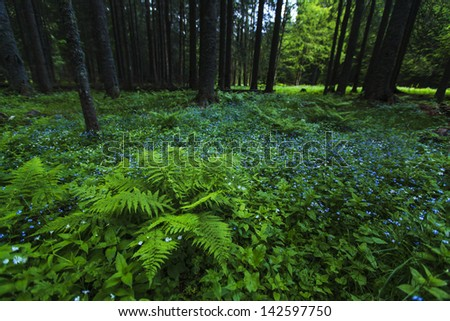 Lush green mountain forest with fern and wild blue flowers