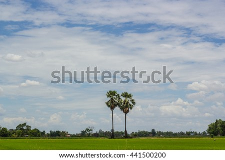 Lush green paddy fields and palm trees provide shade against the blue sky with clouds filled the sky. - stock photo