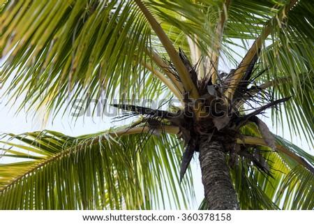 Lush green palm leafs in Jaco, Costa Rica - stock photo