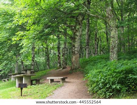 Lush Green Picnic Area on the Blue Ridge Parkway, North Carolina - stock photo