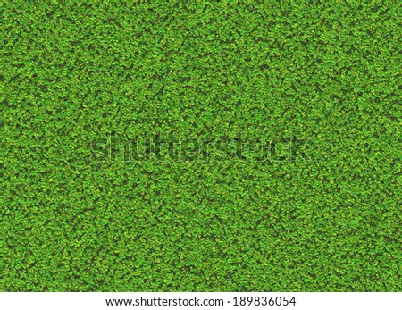 lush green plant texture. wallpapers pattern