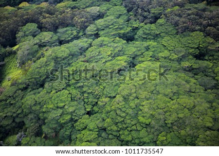 Lush green rainforest from above