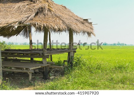 Lush green rice fields with Cottage.