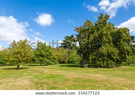 Lush Green Tranquil Woodland Garden in Sunshine