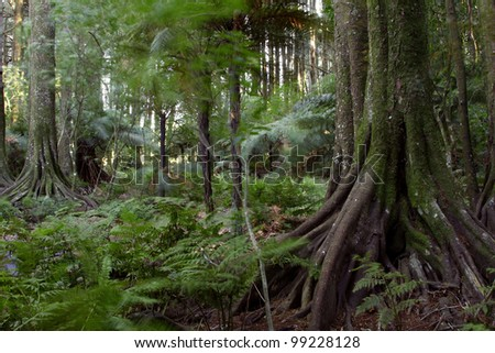 Lush green tropical jungle forest - stock photo