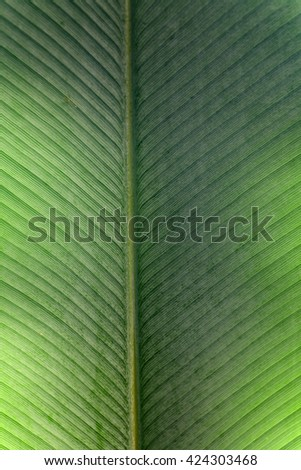 Lush green tropical palm leaf lit by sunshine - stock photo