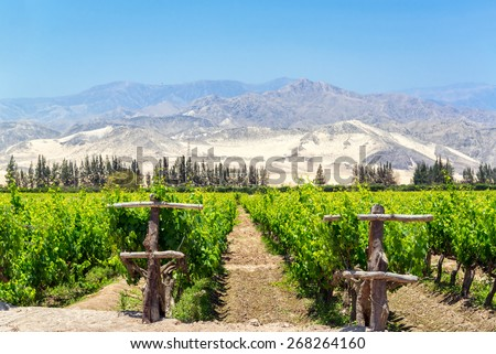 Lush green vineyard for the production of pisco in Ica, Peru with dry sand covered hills in the background - stock photo