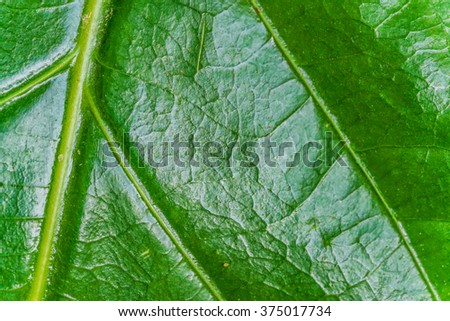 lush leaf texture - macro of green leaf texture  - stock photo