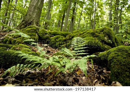 Beautiful Lush Moss And Ferns Cover The Forest Floor.