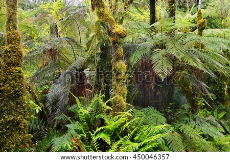 Lush rainforest path In New Zealand