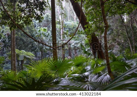 Lush rainforest understorey - stock photo