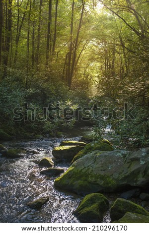 lush river in forest of south carolina - stock photo