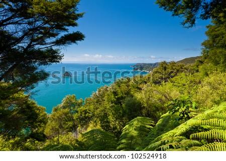 Lush sub-tropical forest vegetation of Abel Tasman National Park, South Island, New Zealand - stock photo
