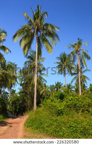 Lush tropical meadow and road with palm trees and clear blue sky - stock photo