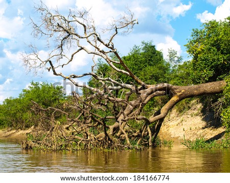 Lush vegetation and fallen tree at amazonian river in Bolivia - stock photo