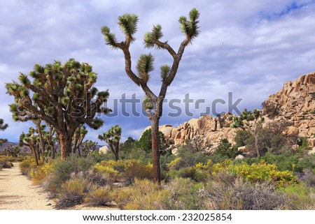 Lush vegetation marks the northern section of Joshua Tree National Park in California. - stock photo