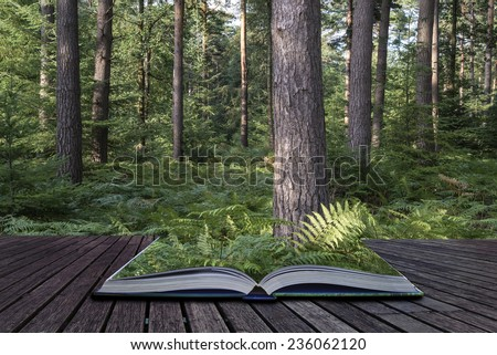Lush vibrant forest landscape in Summer conceptual book image - stock photo