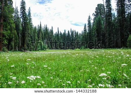 Lush wild meadows, taken in the Giant Forest of Sequoia National Park in Tulare County, California. taken in 2007 - stock photo