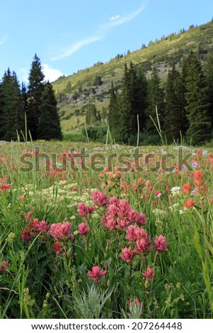 Lush wildflowers in the Wasatch Mountains, Utah, USA. - stock photo