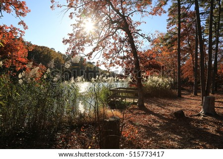 lush wooded landscape during autumn with rays of sunlight