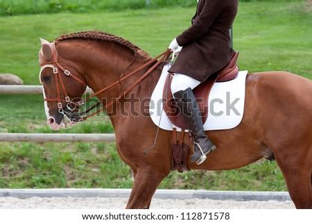 Lusitano Horse Torso - stock photo