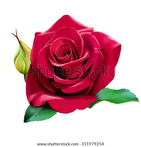 luxury red rose, with a Bud and petals, isolated on white background, watercolor illustration - stock photo