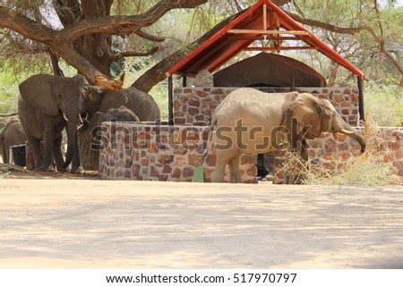 Luxury safari tent house for vacation rentals between African wild elephant herd Namibia Africa & Safari Tent Stock Images Royalty-Free Images u0026 Vectors | Shutterstock