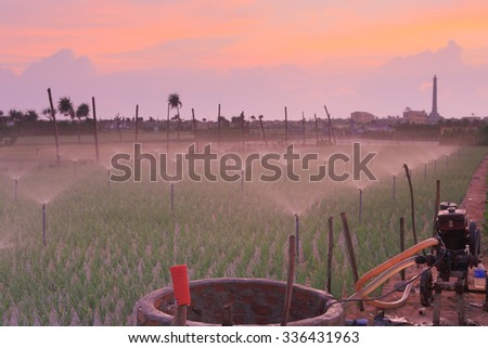 LY SON ISLAND-QUANG NGAI-VIETNAM. APRIL 26,2014. A view of onion farm on early morning in LY SON ISLAND - QUANG NGAI-VIETNAM