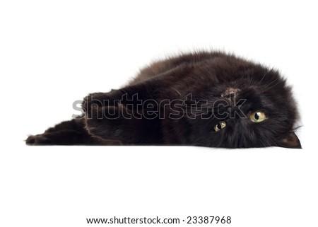 lying black cat isolated - stock photo