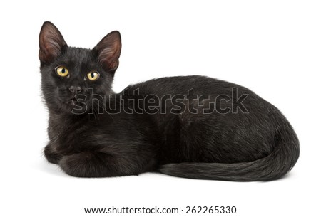 lying black cat, sideview - stock photo