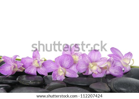 Lying down Branch pink orchid on pebbles