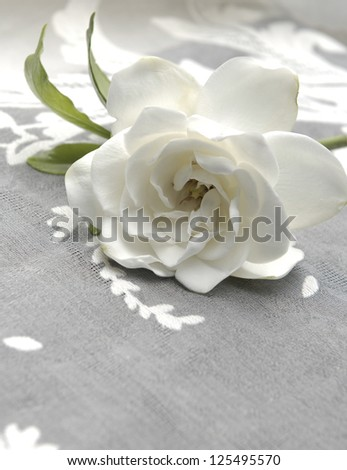 Lying down Gardenia and lace texture - stock photo