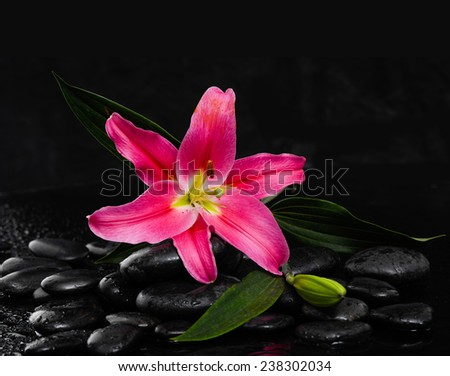 Lying down lily and wet black background - stock photo