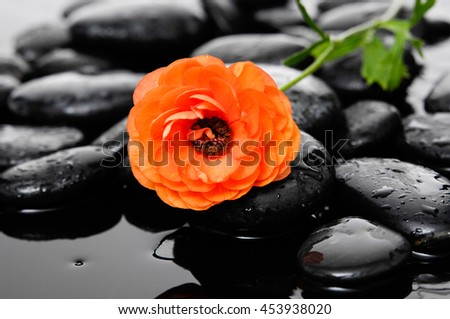 Lying down ranunculus and therapy stones   - stock photo