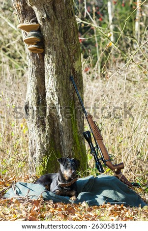 lying hunting dog with a weapon - stock photo
