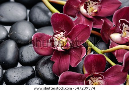 Lying on Red branch orchid on pile of black stones