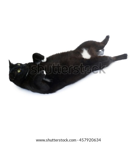 Lying on the floor black cat isolated over the white background - stock photo