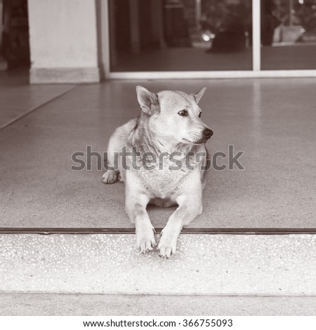 Lying stray dog in brown color concept of looking for home