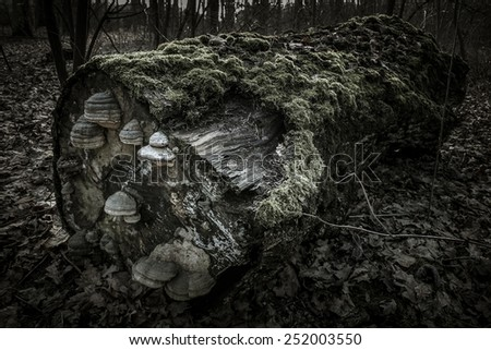 Lying tree trunk covered with moss and mushrooms in a dark forest - stock photo