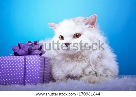 Lying white cat with a gift - stock photo