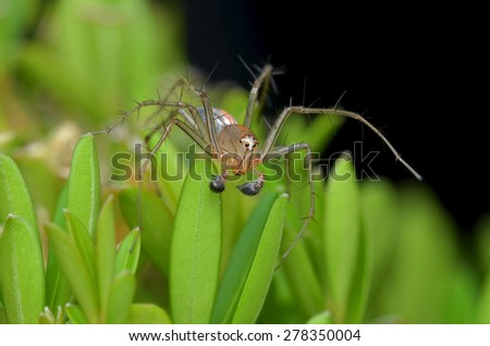Lynx spider standby on the leaf - stock photo