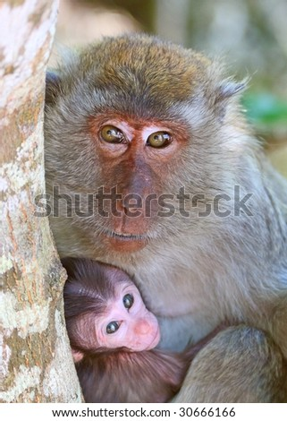Macaque mother with baby - stock photo
