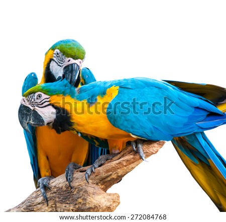 Macau bird - cute bright colorful pretty vivid tropical pet - stock photo