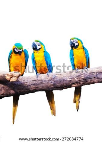 Macau bird - cute bright colorful pretty vivid tropical pet - stock photo