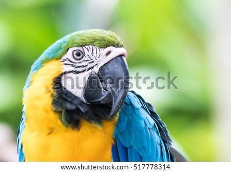 Macaw bird close up