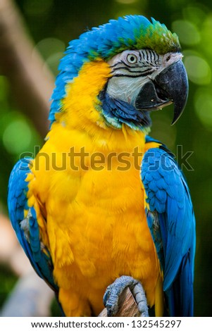 macaw bird head