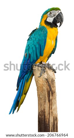 Macaw bird isolated on white background, clipping path
