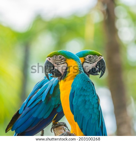 macaw bird sitting on the perch - stock photo